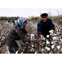 低价转让采棉机2019年投资采棉机怎么样采棉机价格和补贴