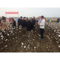 乌苏钵施然采棉机转让采棉机7660大概多少钱采棉机价格