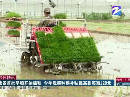 浙江首批早稻开始插秧 今年规模种粮补贴提高到每亩120元