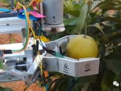 【国际农机展】省力化、轻简化、机械化、智能化——四化同步的果蔬茶机械发展有何亮点?