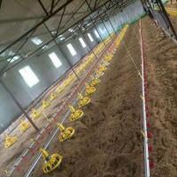 鸡舍鸭棚养殖场自动饮水器养鸡饮水设备喂鸡喂鸭喂鹅水线料线升降
